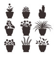 ophiopogon set silhouette vector image vector image