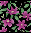 seamless pattern with clematis flowers vector image