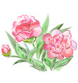 meadow flowers peonies isolated on white vector image