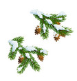 christmas pine and fir branches in snow vector image