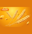 detailed wheat ears oats or barley isolated on a vector image vector image