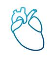 human heart symbol vector image vector image
