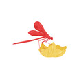 red dragonfly sitting on flower small fast-flying vector image vector image