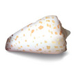 shell on a white background vector image vector image