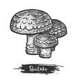 shiitake mushroom sketch or medical asian fungus vector image