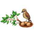 A bird at the branch of a tree watching the nest vector image vector image