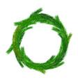 christmas empty wreath vector image vector image