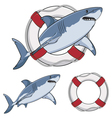 Color image white shark and a life buoy vector image vector image