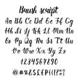 Handwritten latin calligraphy brush script with vector image vector image
