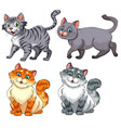 set of diffrent cat charater vector image