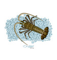 spiny lobster on ice cubes in cartoon style fresh vector image vector image