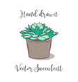 cute colorful hand drawn succulent in a concrete vector image vector image