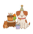 cute pet animal cartoon vector image