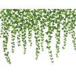 green ivy creeper wall climbing plant hanging vector image vector image