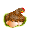red hen with eggs vector image vector image