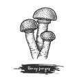 sketch armillaria mushroom or honey fungus vector image vector image