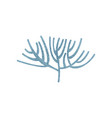 blue branching coral ocean flora tropical vector image