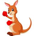 Cute kangaroo boxing