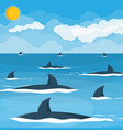 group sharks at sea vector image