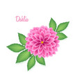 isolated realistic dahlia flower with green leaves vector image vector image