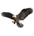 bald eagle attack swoop vector image