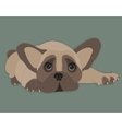 French Bulldog isolated vector image vector image