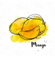 hand drawn mango vector image