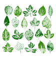 paint stamps different leaves set vector image vector image