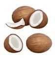 coconut realistic tropical closeup nature fruit vector image