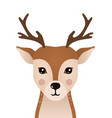 cute deer woodland forest animal vector image vector image