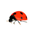 red ladybugs ladybird isolated on white vector image vector image