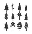 set coniferous trees vector image