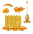 Sweet Honey Combs vector image