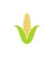 yellow corn vector image vector image