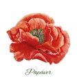 Poppy watercolor painting on white background vector image