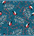bullfinch birds berries mountain ash tree vector image