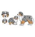cute cartoon australian shepherd dog and puppy set