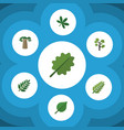flat icon bio set of baobab maple acacia leaf vector image vector image