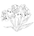 Ink sketch alstroemeria flower vector image