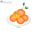 Israel Tangerines or Mandarin Orange vector image vector image