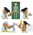 Set Owl doctor and mouse vector image vector image