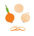 whole bulb onion half and onion rings vector image