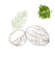 coconut half coconut and palm leaf on white vector image vector image