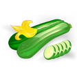 courgettes vector image vector image