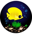 Tropical yellow fish is swimming under water vector image vector image