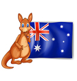 A kangaroo beside an Australian flag
