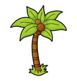 palm tree icon evergreen tree tropical warm vector image