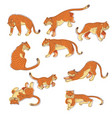 set of hand drawn tigers in different vector image