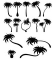 Set tropical palm trees with leaves mature and
