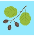 Alder twig with branch leaves and cones vector image